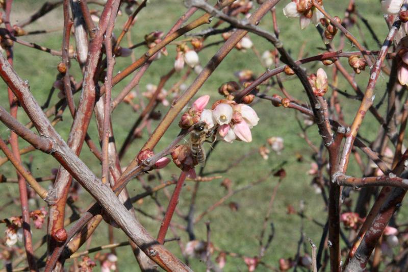 pollination-6