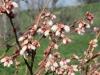 pollination-3