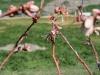 pollination-4