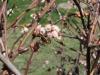 pollination-5