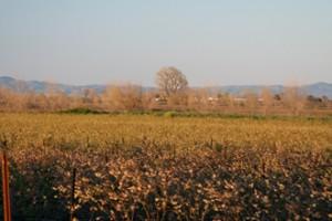 field-4